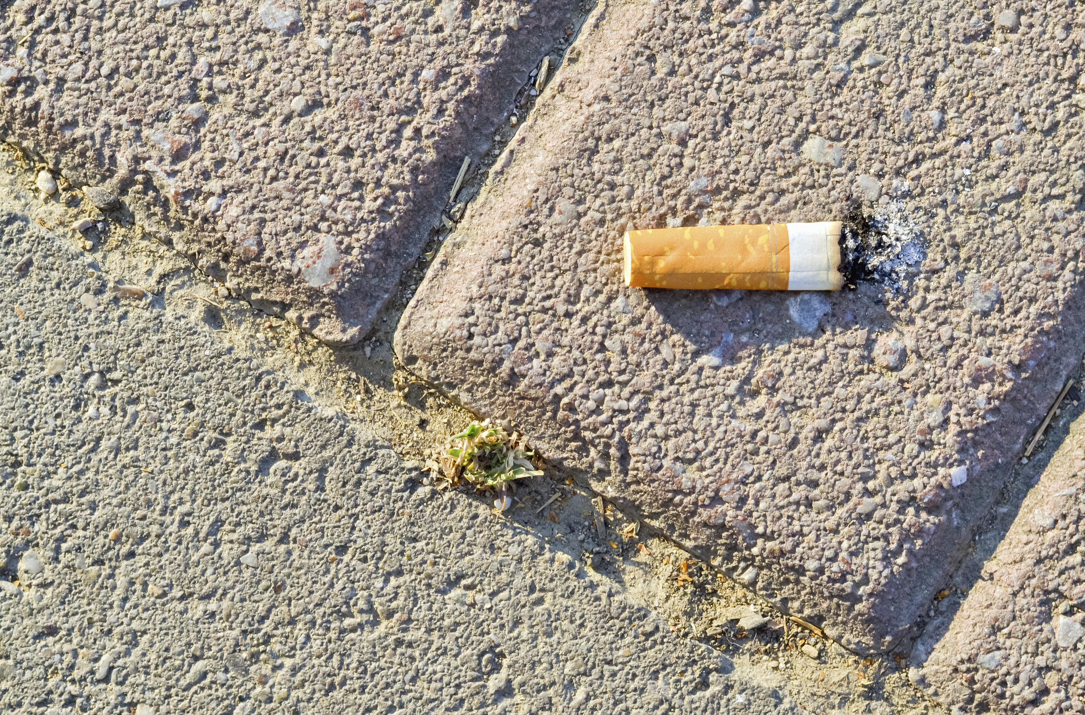 Former director fined for throwing cigarette butt